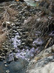 Creeky