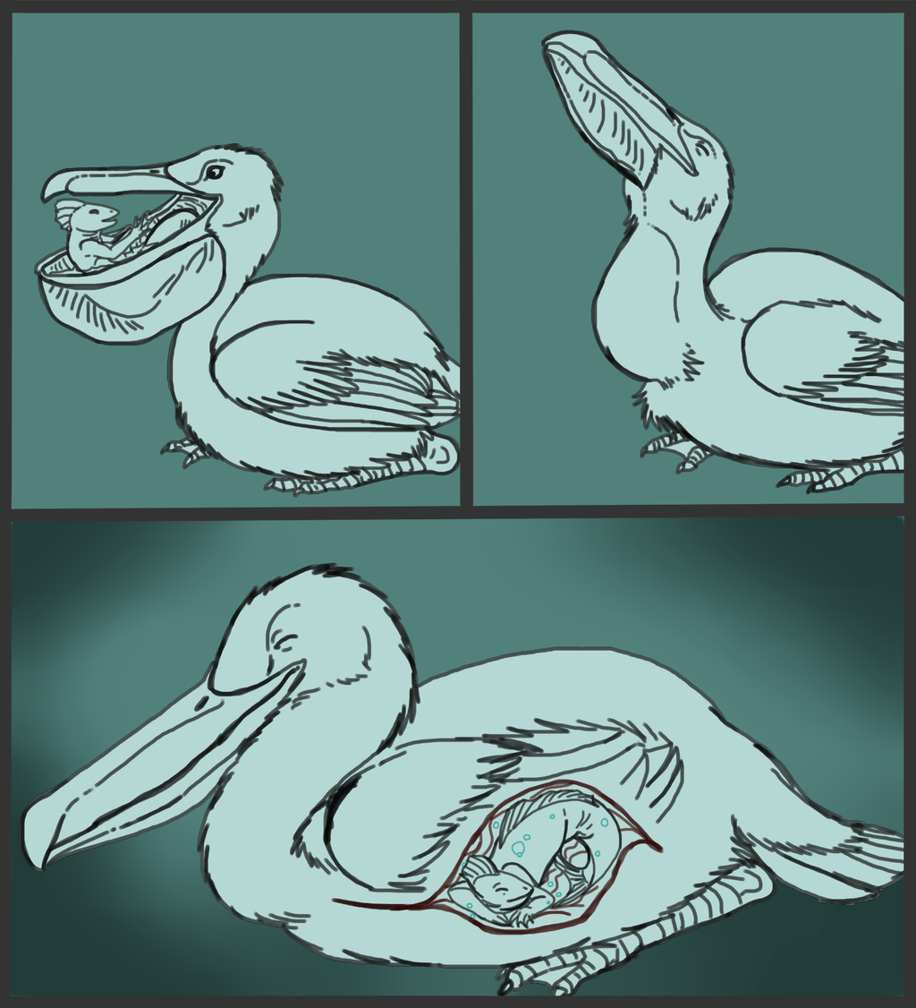 Fishy and Feathered Friends--Vore Sketchcomic