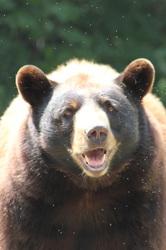 Hi! I'm a bear!