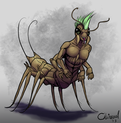 House centipede - commission