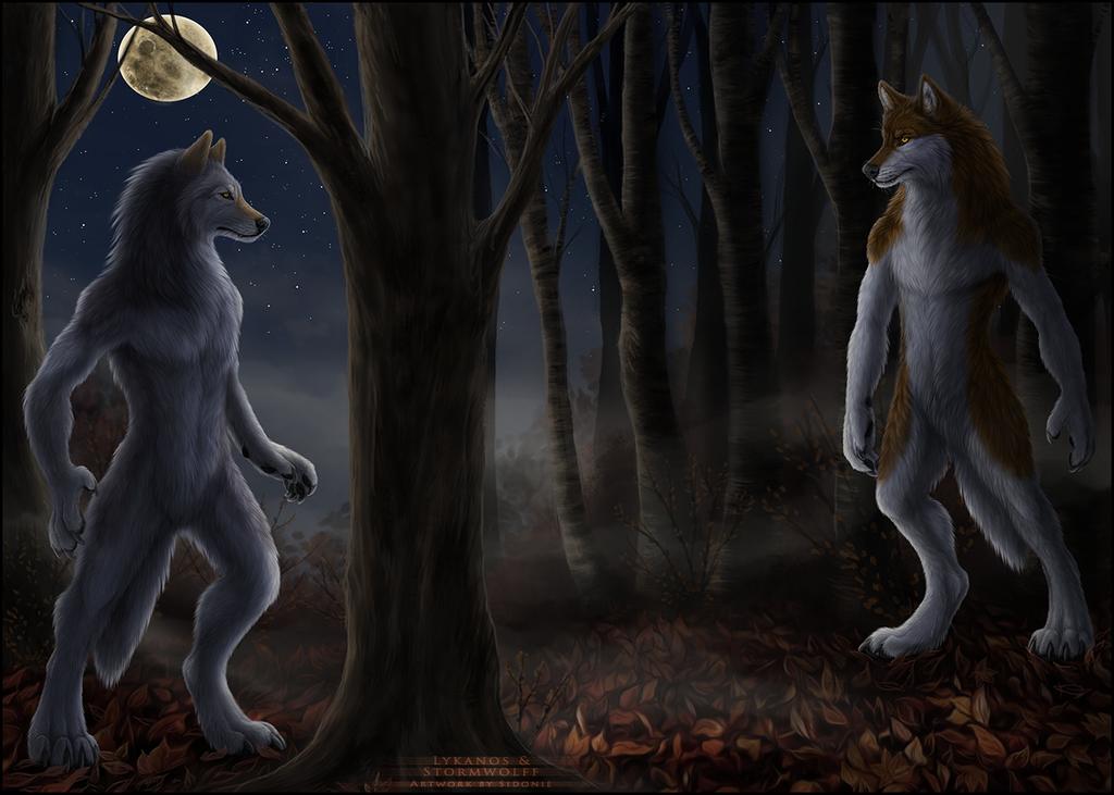 Forest Standoff