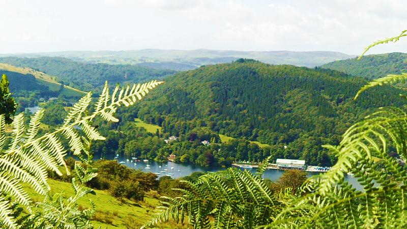 Boats and Vegetation