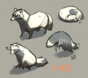 Tanuki doodles