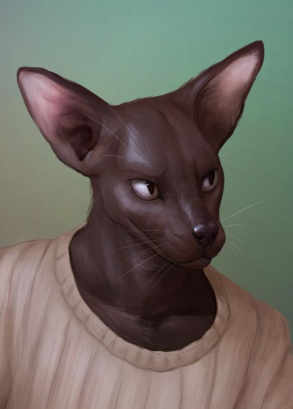 Most recent image: Cat