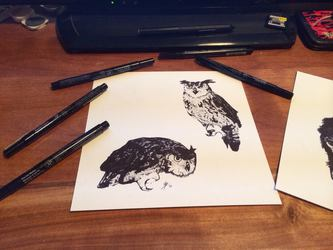 Owls in ink