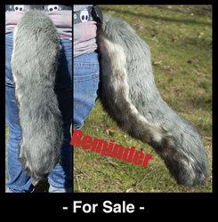 Reminder Beautiful Grey Wolf tail