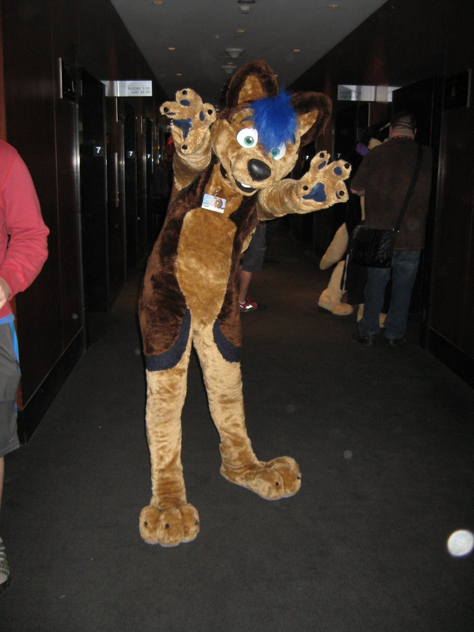 FWA 2013 - Copper the Husky