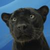 avatar of Skinavish