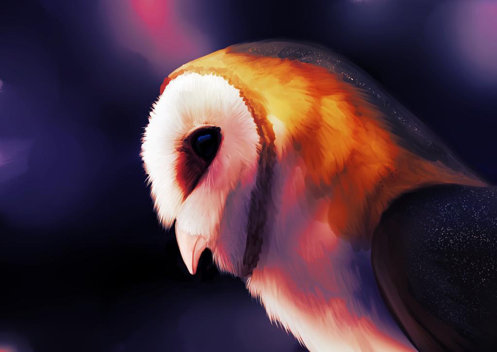 Barn Owl Speedpaint