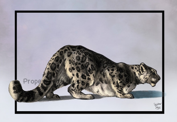 Personal: Snow Leopard Revisited
