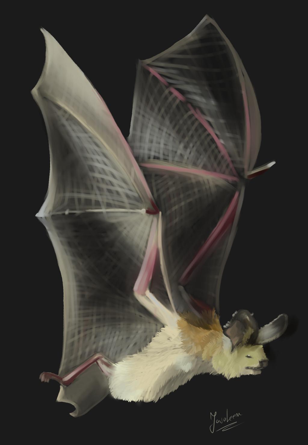 Most recent image: Bat study