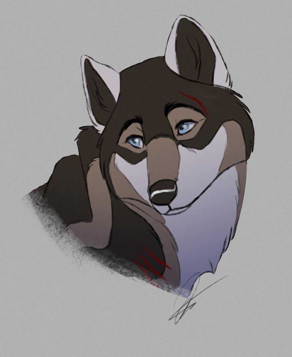 Shy Wolf by Contusio