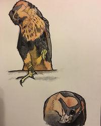 Nel Watercolor Studies