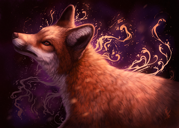 Colors of fox