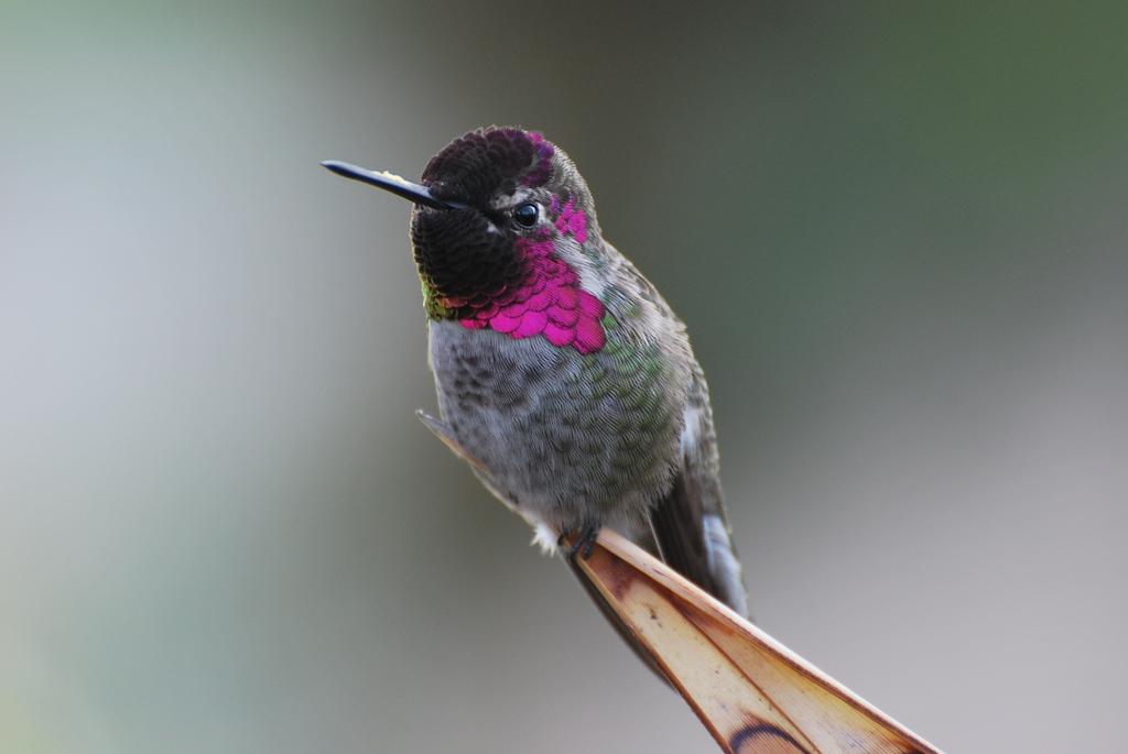 Featured image: Hummingbird 2
