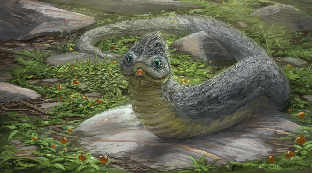 Most recent image: Furred tundra snake
