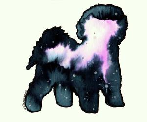 Galaxy Bichon Frise