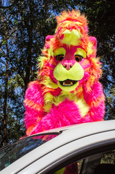 March Meet: More Nox the Starburst Lion
