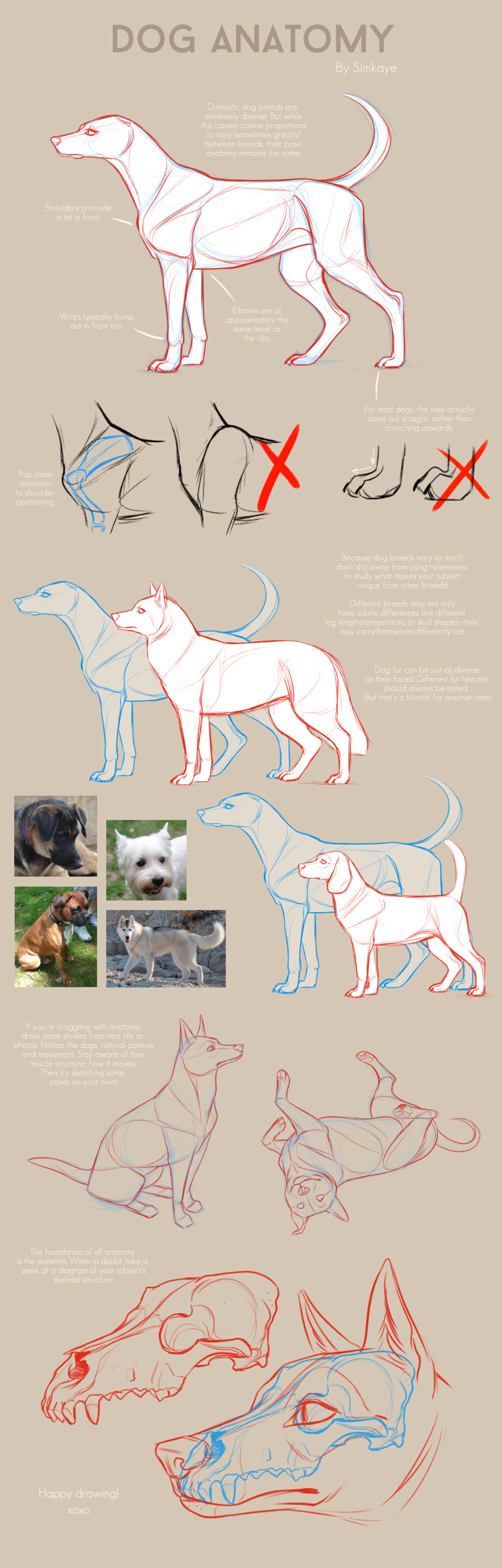 Most recent image: Dog Anatomy