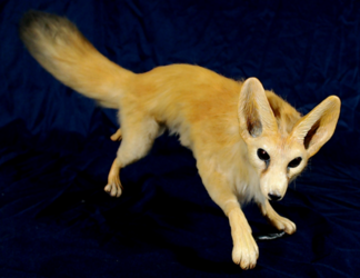 Fennec Fox OOAK doll: for sale
