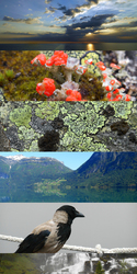 Norway Trip Highlights