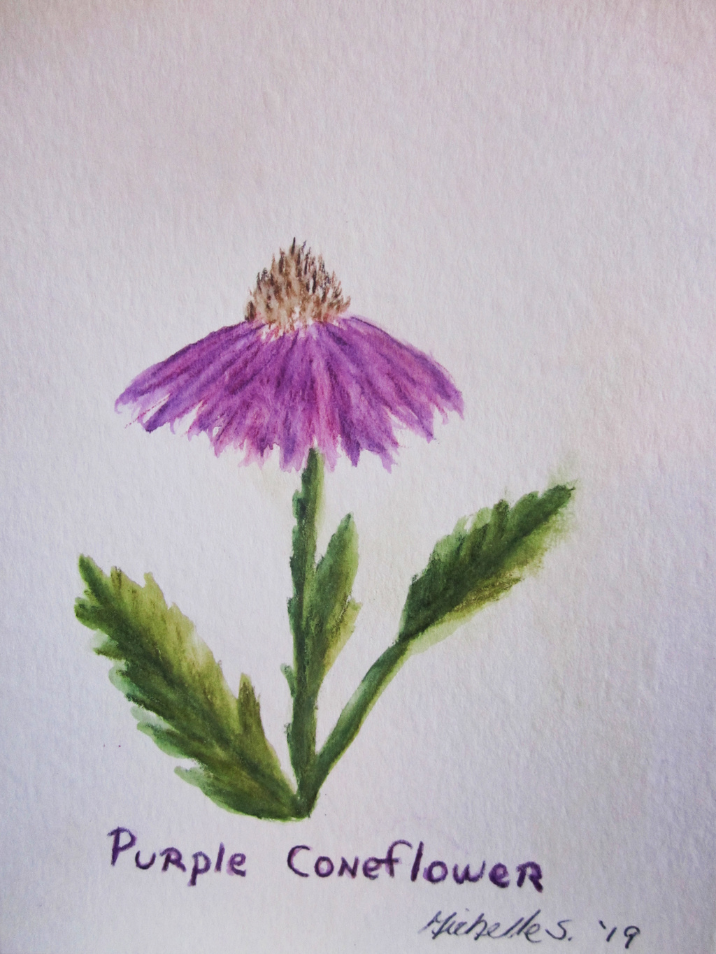 Most recent image: Purple Coneflower Greeting Card