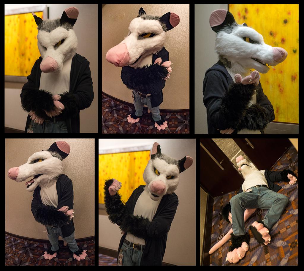 Secret Possum Revealed
