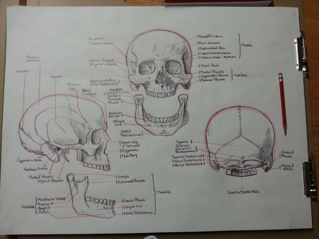 Skull Assignment