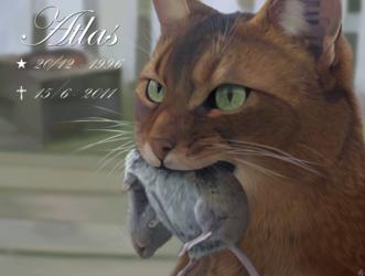 In memory of Atlas