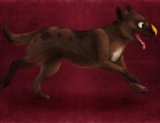 doggo does a run