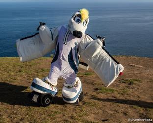 Bald Hill: Wingspan