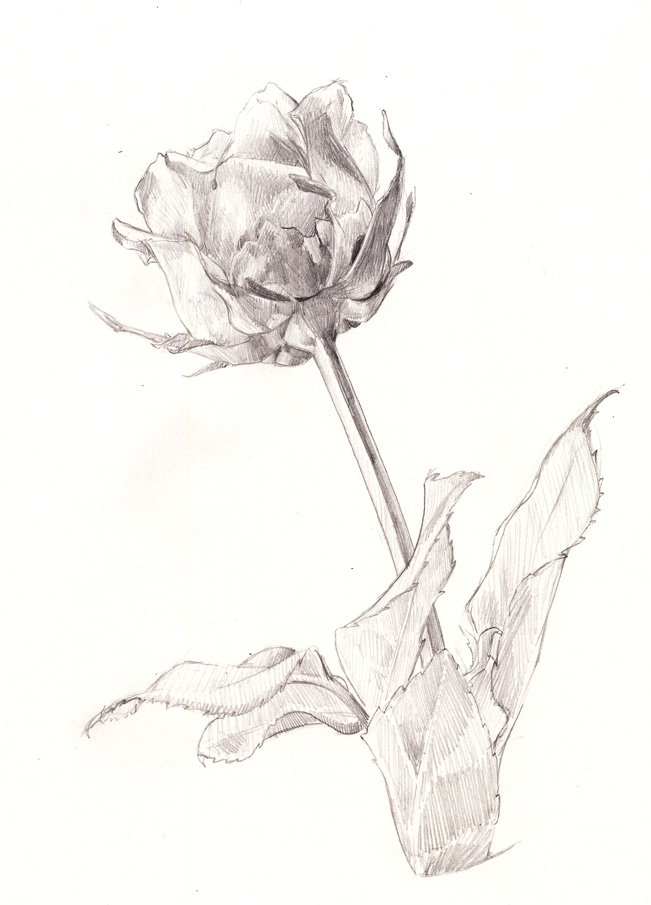 Featured image: Rose