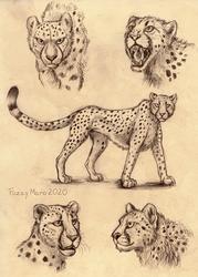 Sketch page- Cheetah