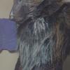 avatar of Rayne