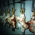 Dissasembly Line - Theme of the Slaughterhouse (Oct 13 2011)