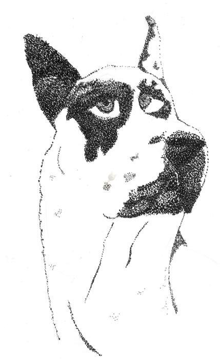 Harlequin Pointillism