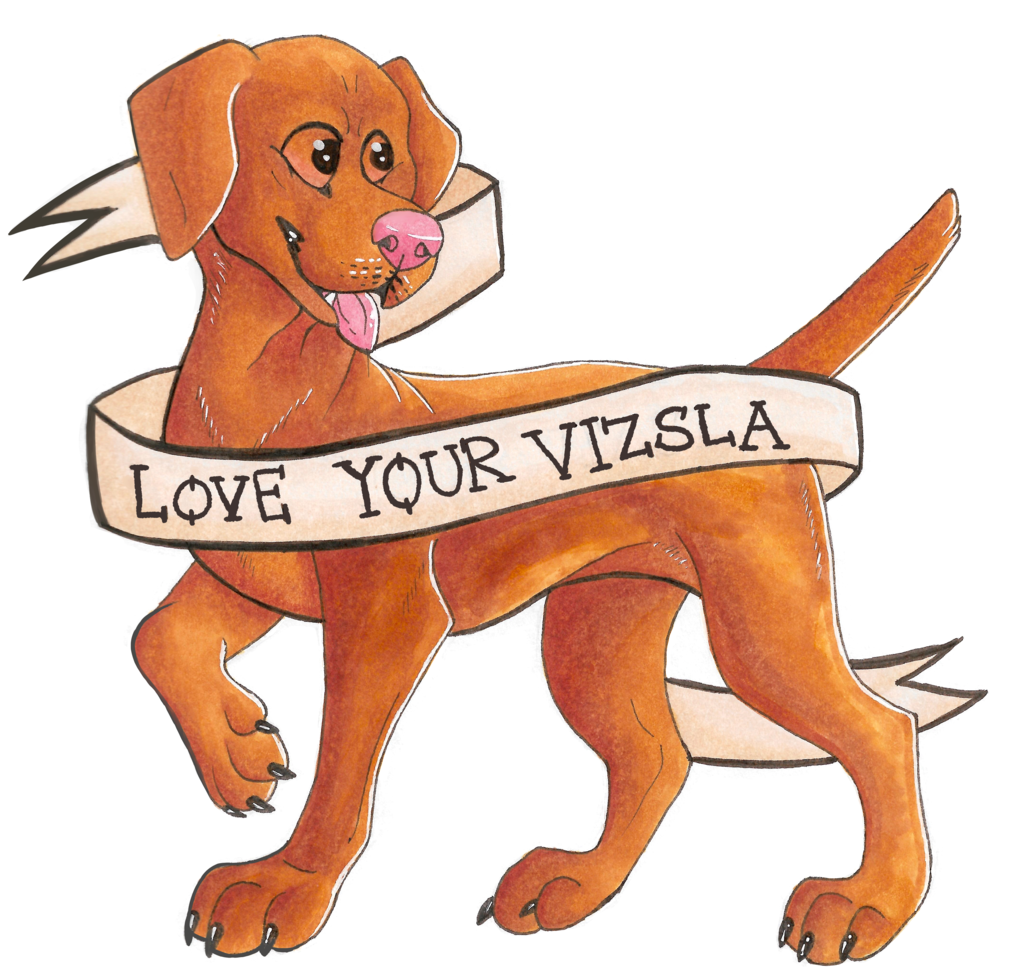 love your vizsla