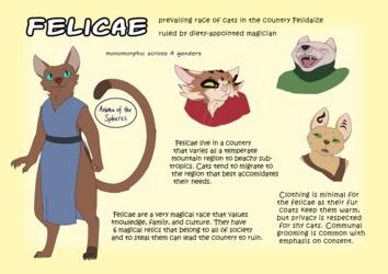 Felicae Basics