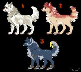 canine adopts