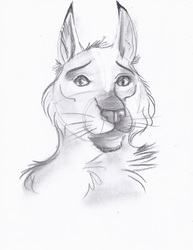 Portrait of a Lynx in Charcoal