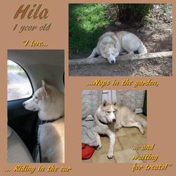 Hila - 1 year