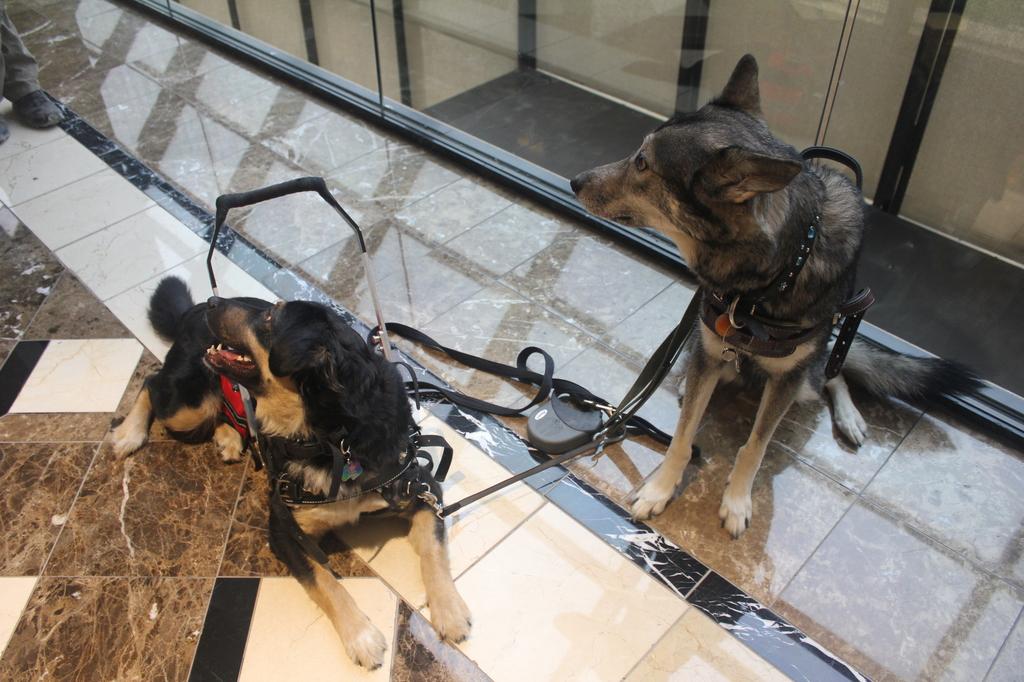 Texas Furry Fiesta 2016 - Service dogs