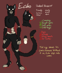 Echo the (kind of dead) House Cat