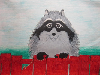 Raccoon on the Fence