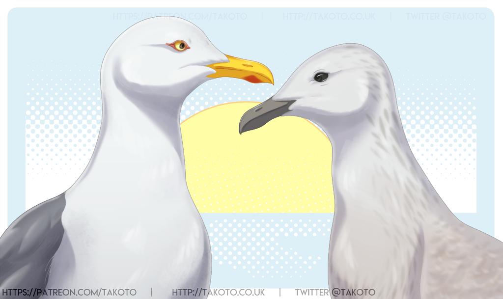 Gulls 20052019