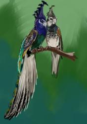 Peacockatiels