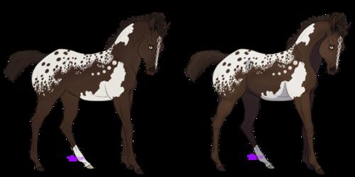 Clairvoyant (Breeding / Sold)