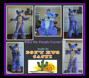 Riley the Purple Coyote by DHC!!!