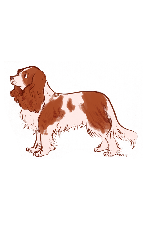 Featured image: Cavalier King Charles Spaniel