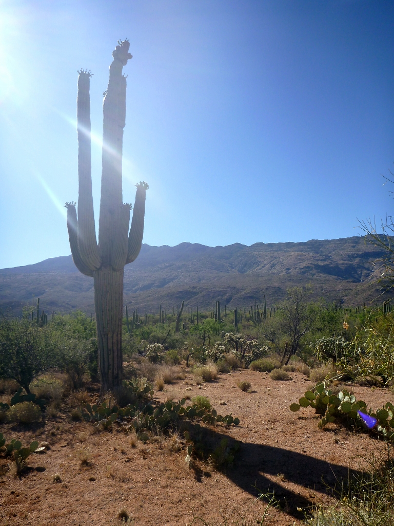 Featured image: Saguaro Sundial